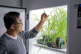 Myeong-Je Cho looking at a plant