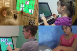 Young girl, monkey, Bolivian woman and American woman pointing to images on computer screens while being tested on recursion ability.